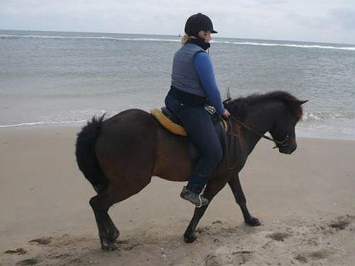 In de stress op een onbekend paard - Vlieland 2010